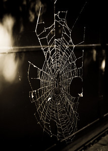 Spiderweb outside of TTS