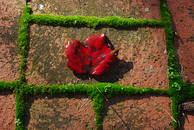 Red leaf in moss