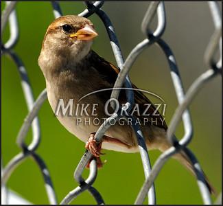 jail_bird_4199