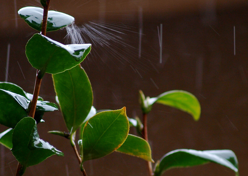 caught the raindrop