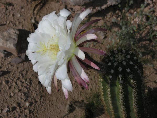 Morning Bloom 2