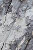 Bark Texture<br /> February 20, 2010