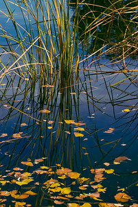 Reeds and Leaves