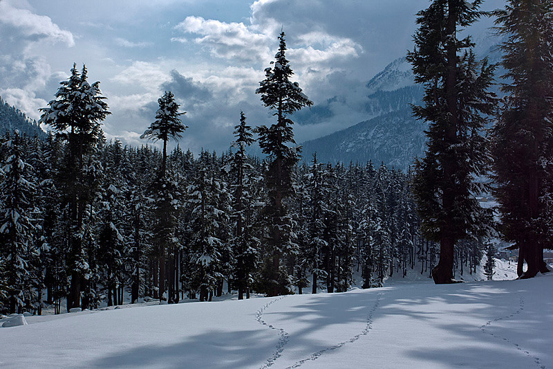 "Kalam forest, Swat valley ""Pakistan"""