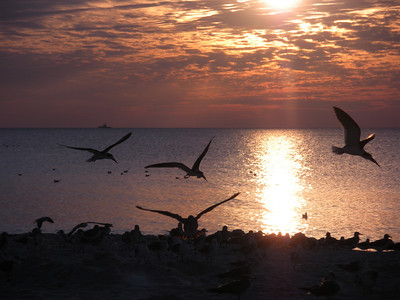 Naples Sunset and birds.