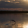 Bird flying over water at sunrise