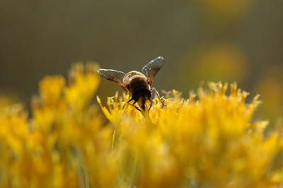 in the beehive state, logan canyon utah