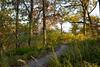 131 Shaw Nature Reserve - Path Scene