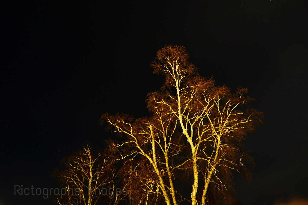 Birch Trees, Rictographs Images