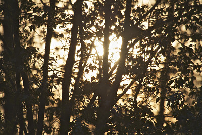 Sun setting behind the trees