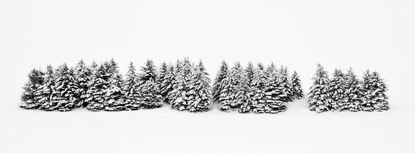 Trees 0019
