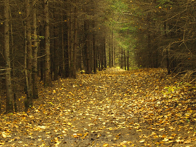 Autum Forest Walk