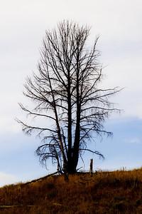 Trees 0012