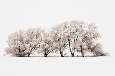 Trees 0020