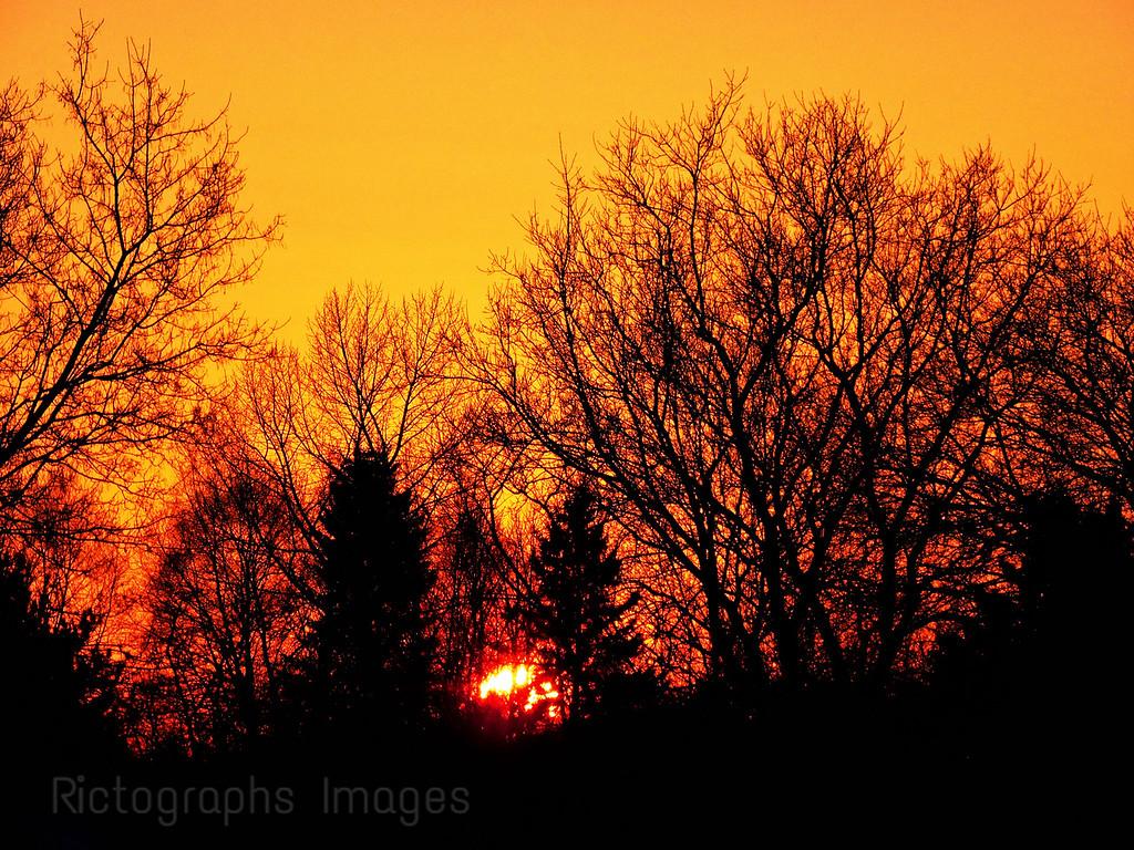 Forest Trees, Sun Setting, Landscape