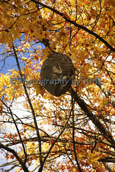 a beehive hanging in a tree in the autumn