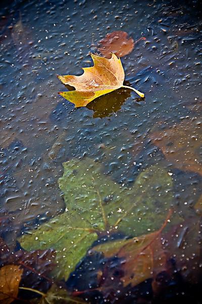 """Temporary Escape"" - On the pond near my house, Salt Lake City, Utah. USA"
