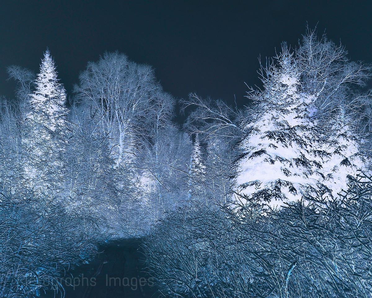 Inversed Color Winter Trail
