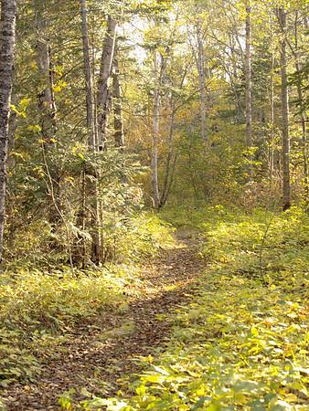 Boreal Trail