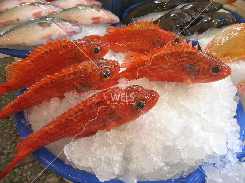 Fresh seafood on ice at the fish market of Taichung Harbor, Taiwan by kstellick