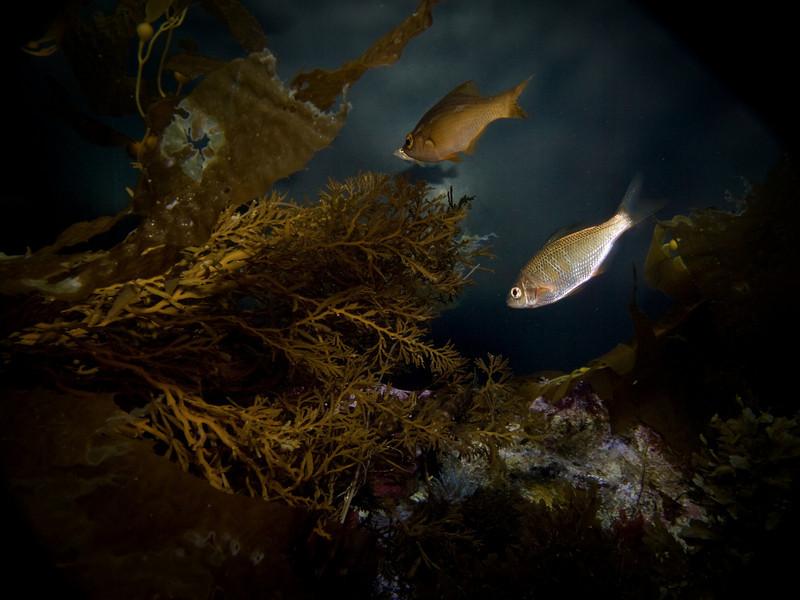 under sea 4