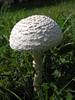 008 Mushroom Study 04