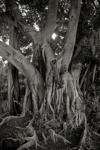 """Gnarly in Hawaii #2"" Oahu, Hawaii USA"