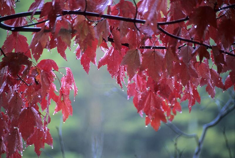 Autumn Reds<br /> Alger County Michigan