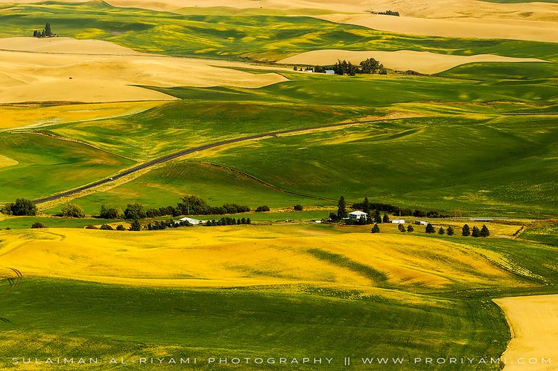 Palouse fields from Kamiak Butte, East Washington state, USA