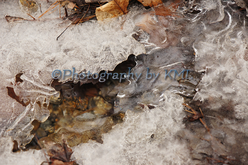 Leaves and Ice