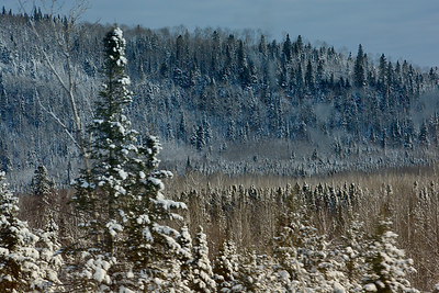 Winter Boreal Forest