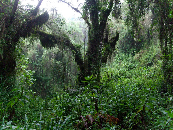 Rwandan Rainforest