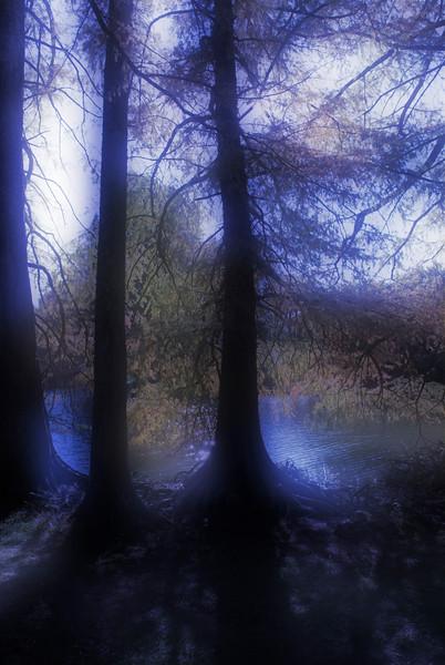 124 Shaw Nature Reserve (scope it out) dreamsuite dreamy bluetip darker