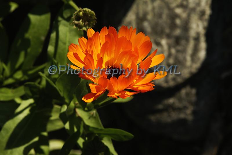 an orange flower in the afternoon sun