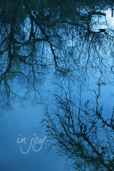 Trees Reflecting In Pond