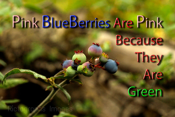Pink BlueBerries Quote