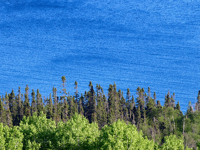 Trees & Lake Superior