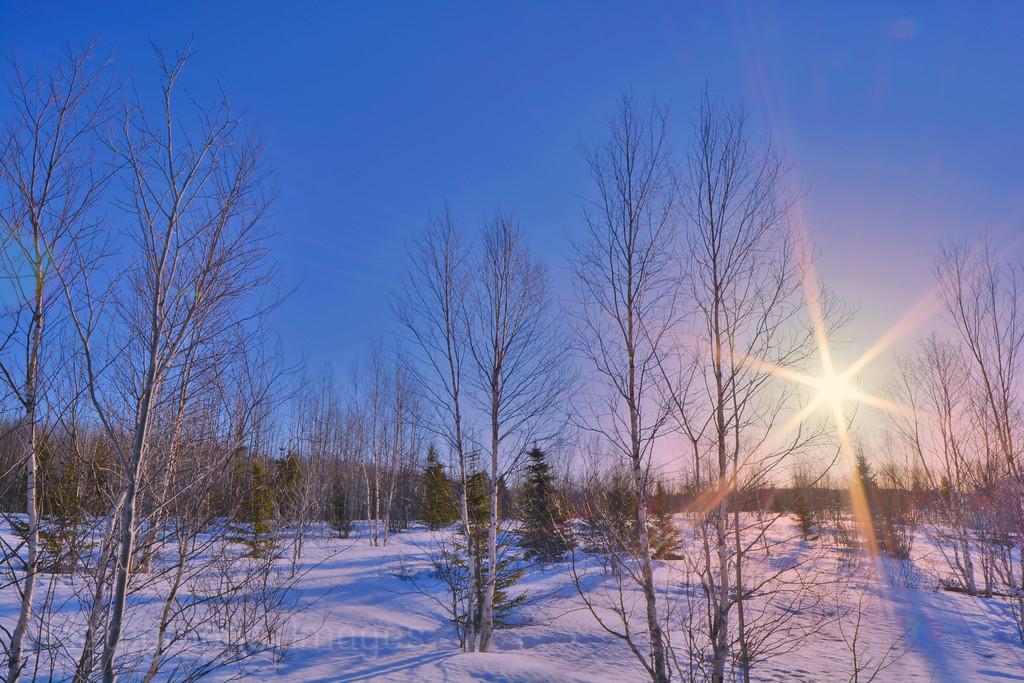 Winter Sunrise 2015