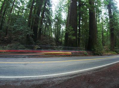 Racing through the woods: ref : c60f2996-389c-4b5a-ae7d-d615d60cb958