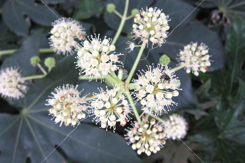 Bee on flower by kstellick