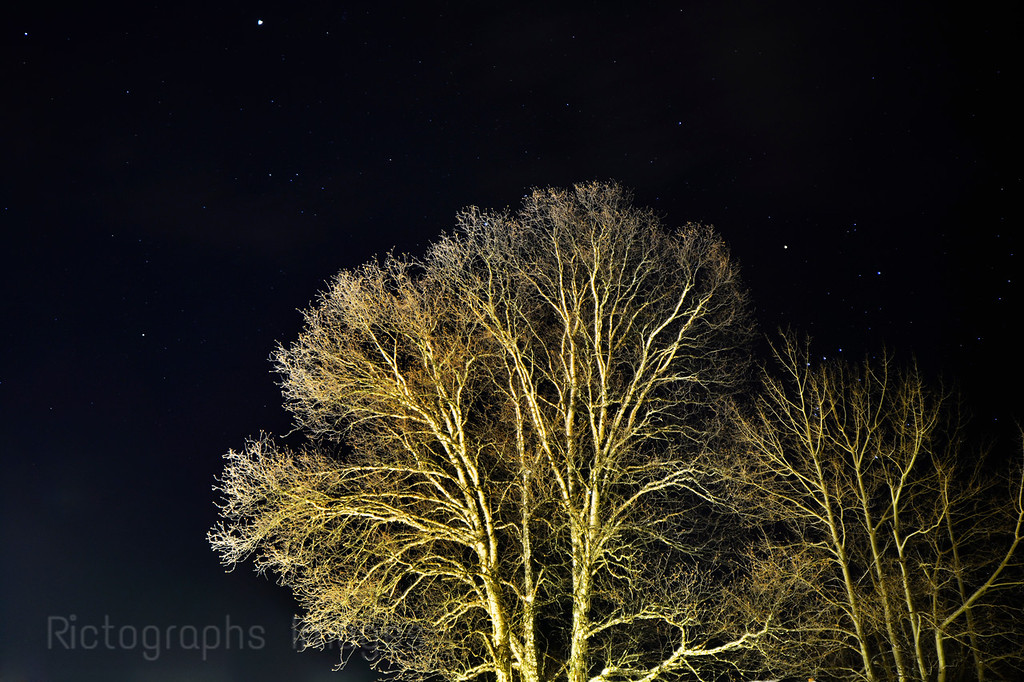 Winter Trees 2015
