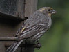 "Finch, House (a ""fairly rare"" variant) -photo 1"