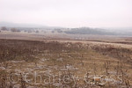 A Winter's Day in Drought-Emptied Folsom Lake (1 Jan 2009)