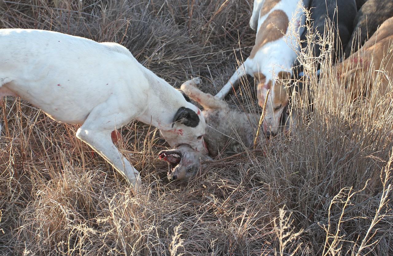 Coyote Hunters