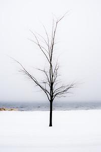 Trees 0023