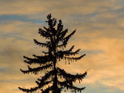 #A Tree, With Sky