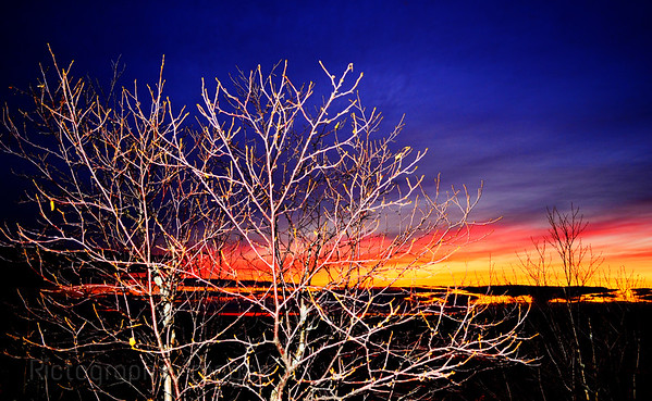 Blue Hour, Trees
