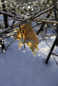 a leaf covered with ice on a branch