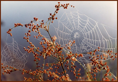 N-H-0015-17 Autumn's Web