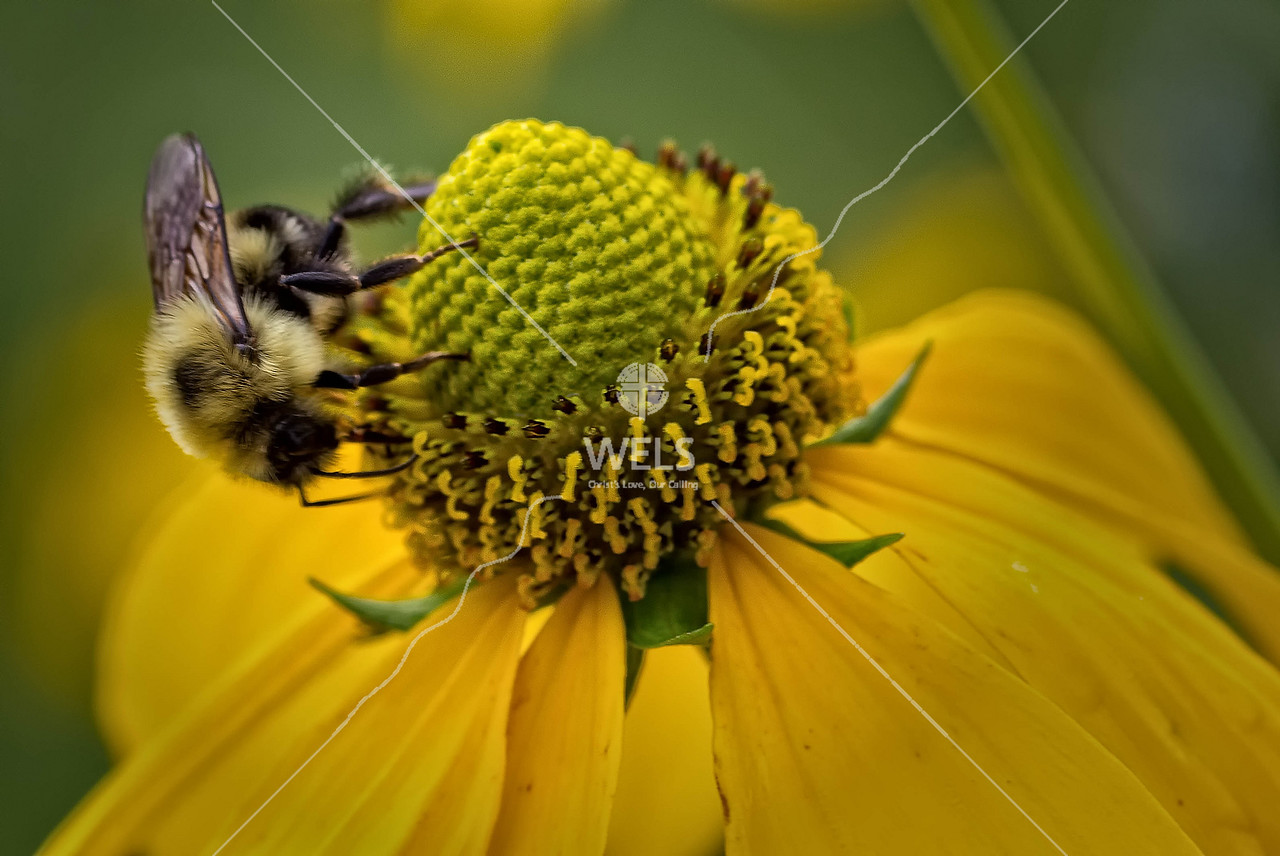 Bee and Daisy by mspriggs